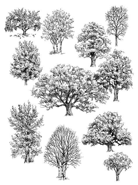 drawings of trees drawings of trees artist s network