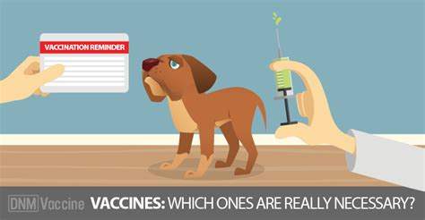 what vaccines do puppies need which vaccines does your need