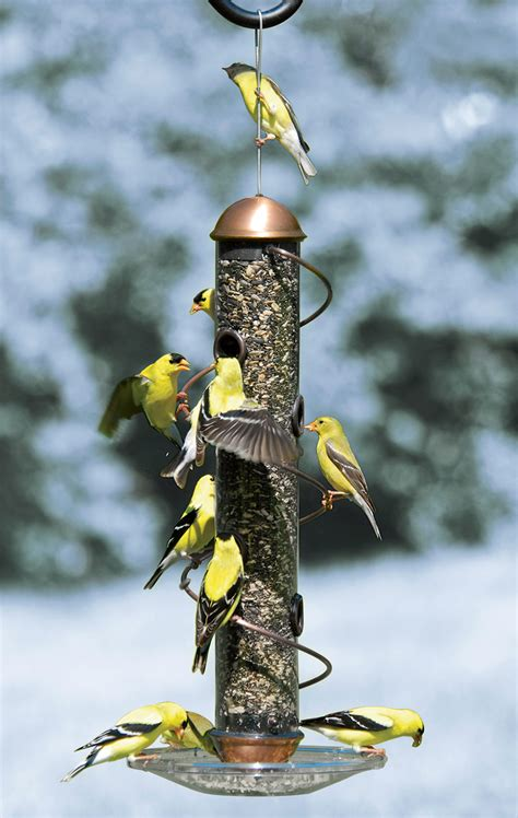 finch feeder copper spiral sunflower feeder gardenerscom