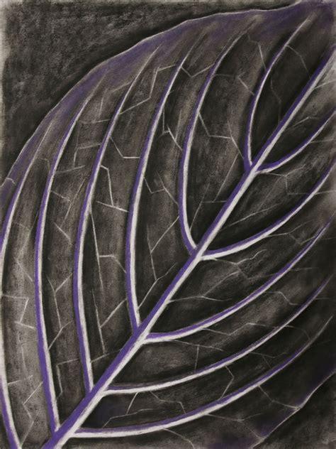 venation pattern analysis of leaf images the vein patterns of leaves art series laura kranz