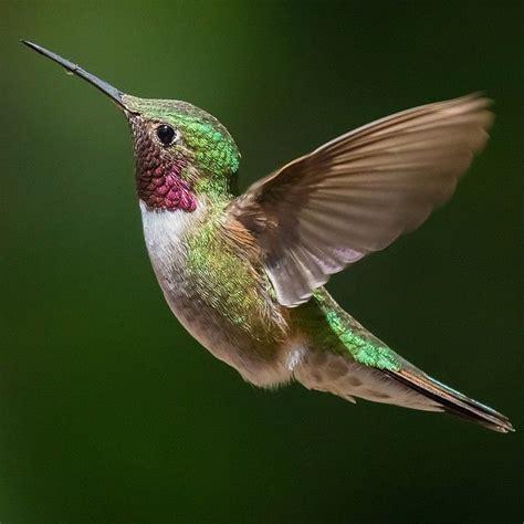 colors of hummingbirds mi reto de pintarlo marine electronics products birds