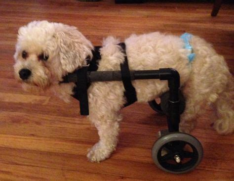 hind legs suddenly paralyzed diy wheelchairs on wheelchair