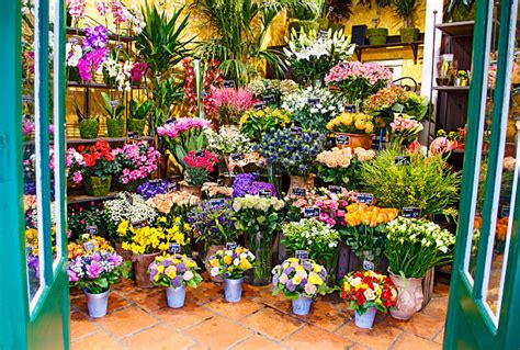 The Flower Shop by Royalty Free Flower Shop Pictures Images And Stock Photos