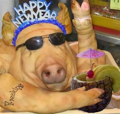 new year animal pig pig pictures world