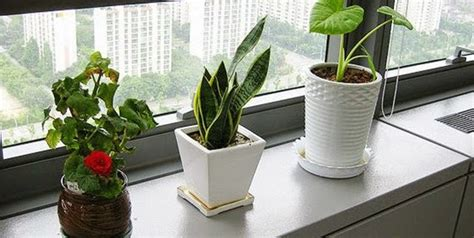 office desk plants 5 reasons to have lovely plants at office desk