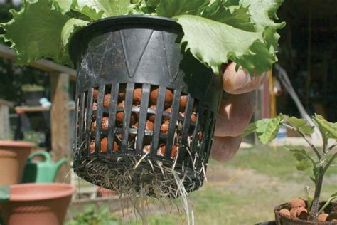 outdoor hydroponic systems  sense