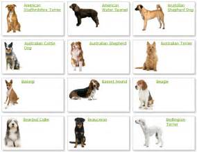 All Types Of Go Back Gallery For All Types Of Dogs Breeds Litle Pups