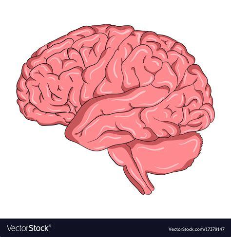 brain images brain symbol icon design beautiful vector image
