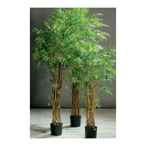 bamboo tree  pot floresyonline