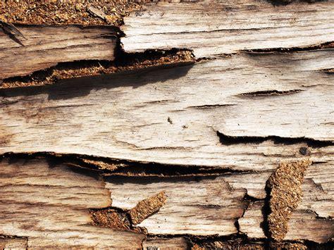 koleksi background alam batu gratis terbaru