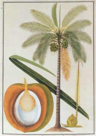 Minyak Kelapa Tradisional februari 2010 produk olahan hasil kelapa