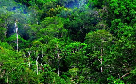 Paya Hijau persebaran flora dan fauna di indonesia ilmu pengetahuan