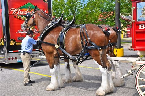 who owns bud light 17 best images about budweiser the king of s on