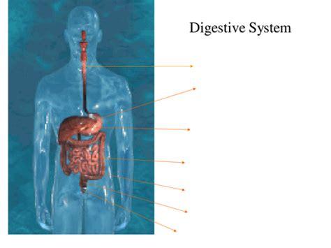 Digestive System Powepoint By R Dally Teaching Resources Digestive System Powerpoint
