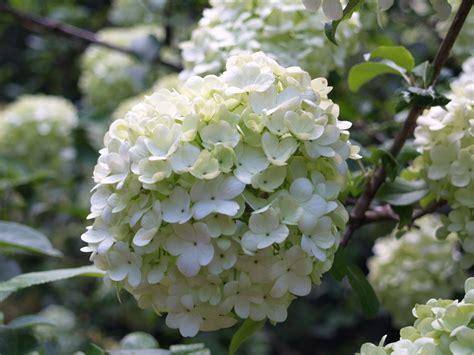 19 april 2010 ramblin through dave s garden