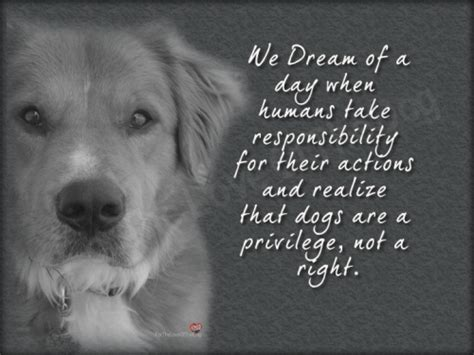 when is a not a puppy anymore dogs a privilege not a right for the of the