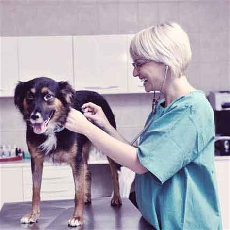 what causes uti in dogs causes of uti in dogs bacteria e kidney stones petcarerx