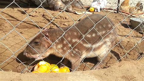 imagenes de xeso animal tuza real youtube