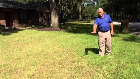 treatment for sod webworms youtube