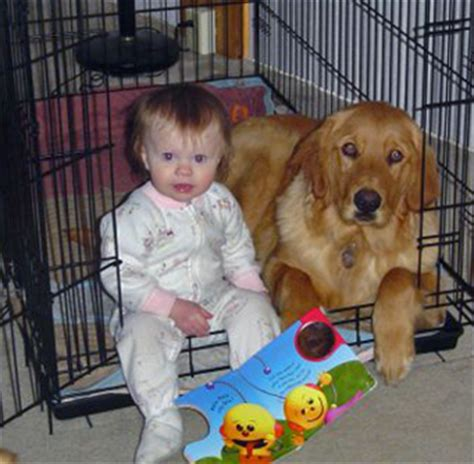 golden retriever and babies the cost and value of high tech pet treatment petful