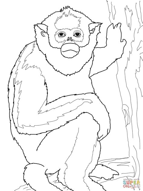 colobus monkey coloring page rainforest african coloring page colobus monkey coloring