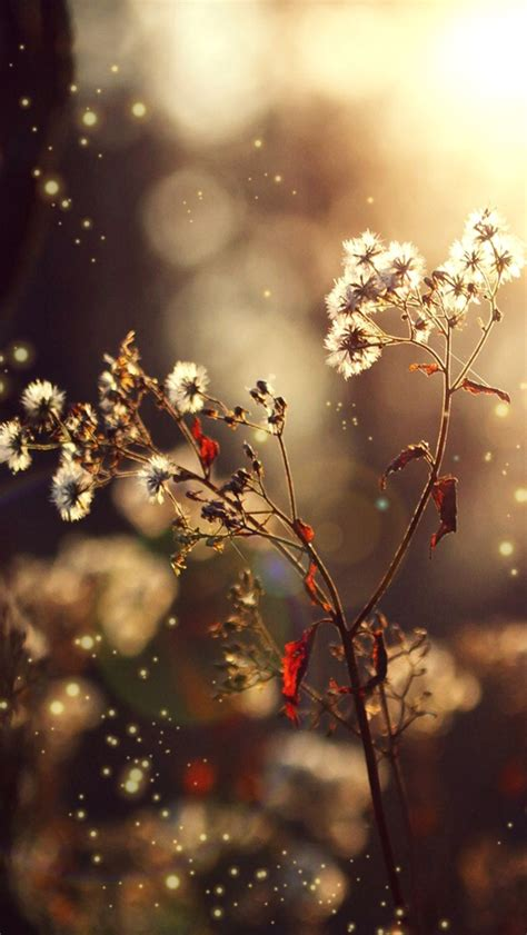 themes photos hd download dandelion iphone wallpaper themes hd 10068 hd wallpapers