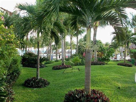 Gartengestaltung Pflanzen by Looks Like Oyster Plant Around The Base Of Palms Garden