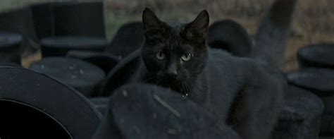 film mandarin black cat cat of the day 032 the prestige cats on film