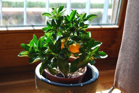 beautiful house plants photo picture 2022 choisir un arbre fruitier nain marie claire