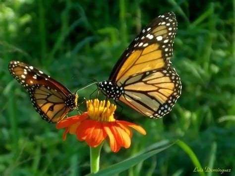 imagenes mariposas naturaleza imagenes de paisajes y animales hermoso paisajes