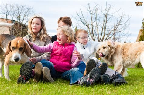 Dogs and families   Some safety tips to remember   Pets4Homes