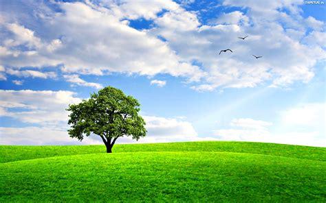 blue sky landscaping drzewo łąka chmury