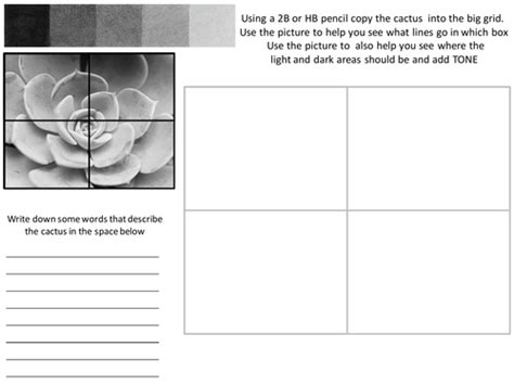 Tonal Drawing Worksheets tonal succulent worksheet with evaluation by rnd86
