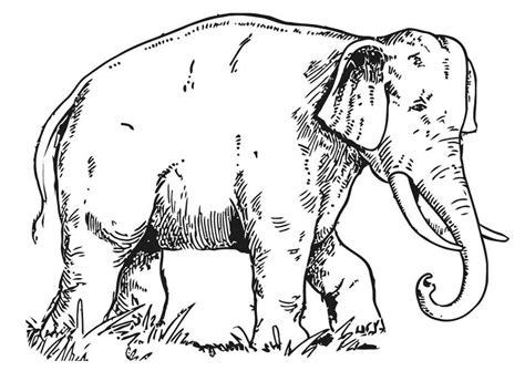 disegno da colorare elefante cat  images