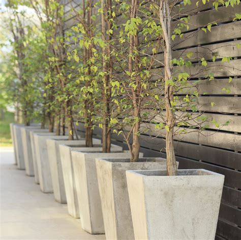 tree container tips for growing trees in containers