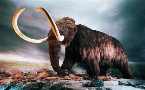 imagenes wallpaper de animales animales fant 225 sticos mamut wallpapers