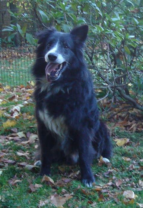 hunde aus polen suchen ein zuhause hunde aus italien suchen ein zuhause ein ganzes leben
