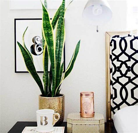 indoor plants  complete guide    indoor plants