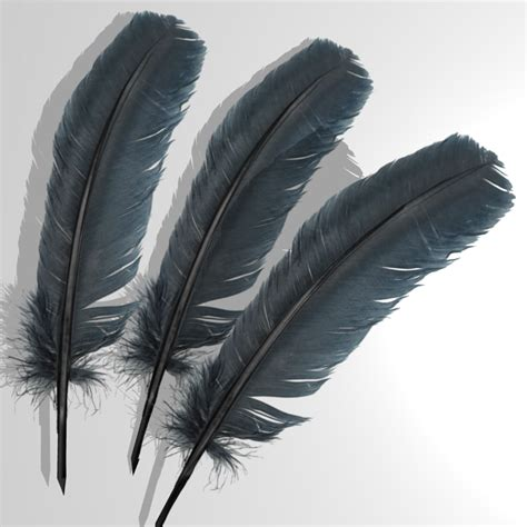 3d Model Feather bird feathers 3d model