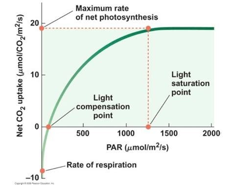 Light Compensation Point lect 5 6 biology 281 with ostling donald zak at of michigan arbor