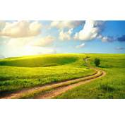 Green Way Sunset Road Wallpaper  Images