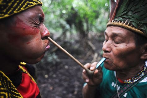 amazon tribe flu infected isolated amazon tribe can be wiped out