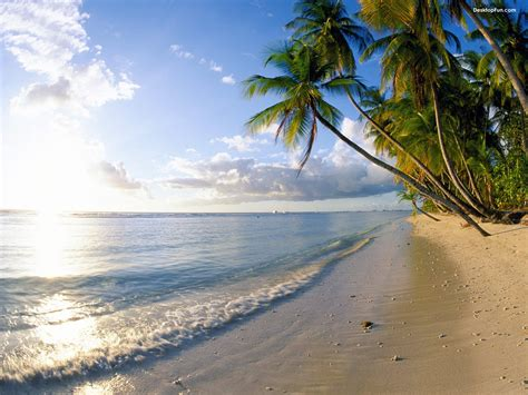 Find In And Tobago Pigeon And Tobago Tourist Destinations