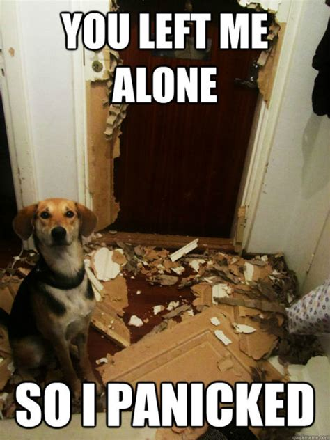 leaving puppy home alone see what really happens when you leave your home alone