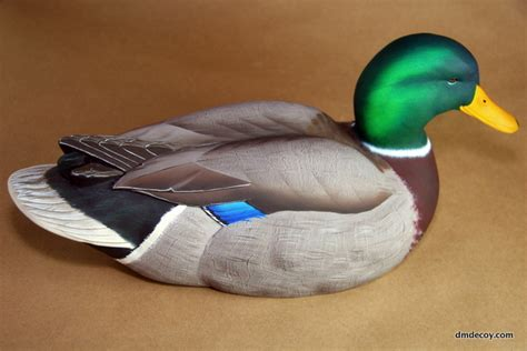 contemporary style mallard dmdecoy
