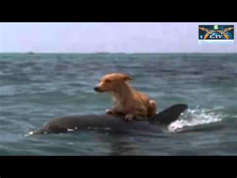drowning puppies dolphins help save from drowning
