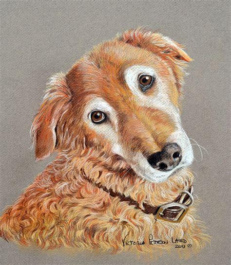 beau the golden retriever portraits pet portraits by peterson laird cat and