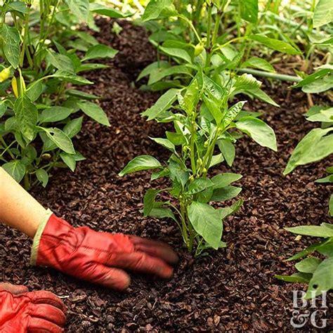 beginner vegetable garden better homes gardens