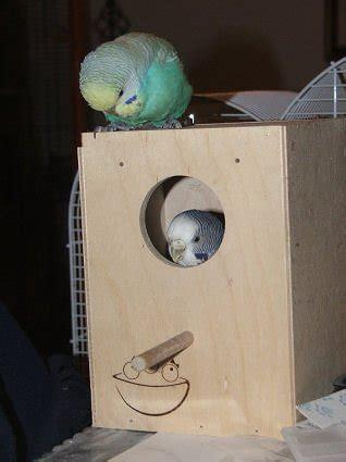 riproduzione cocorite in gabbia i pappagalli curiosit 224 e informazioni sui pappagalli