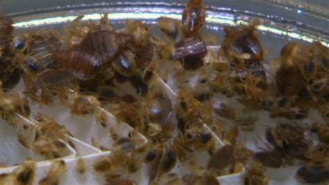 new york hotel bed bugs bedbug threat irks hotels spooks guests cnn special